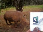 Rhinocerous-at-the-Nairobi-.jpg